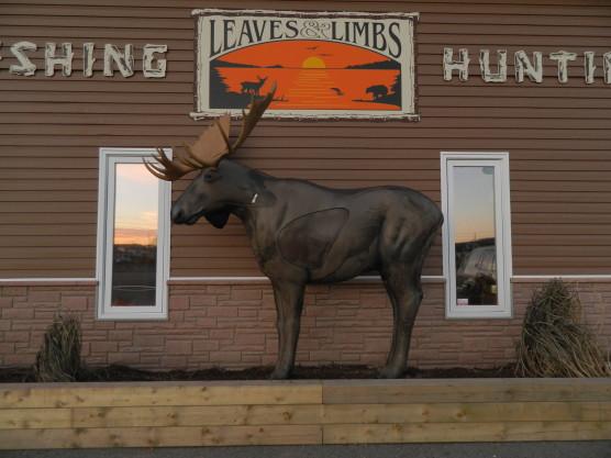 Leaves & Limbs Sports: Moose!