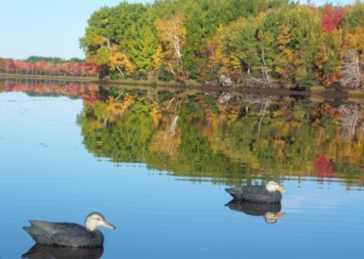 Leaves and Limbs: Blinds and Decoys